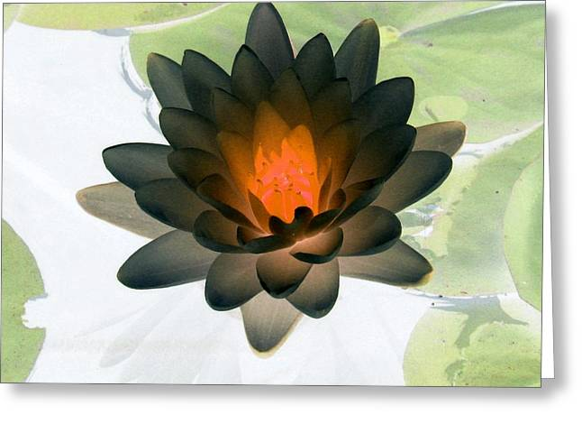 Greeting Card featuring the photograph The Water Lilies Collection - Photopower 1035 by Pamela Critchlow