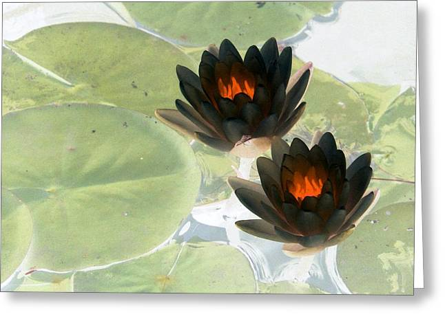 Greeting Card featuring the photograph The Water Lilies Collection - Photopower 1039 by Pamela Critchlow