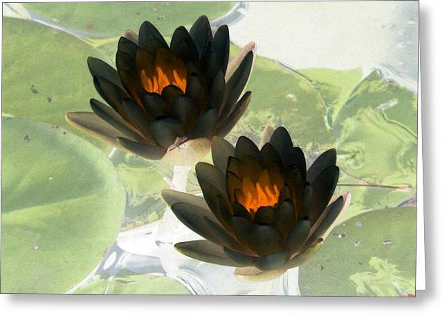 Greeting Card featuring the photograph The Water Lilies Collection - Photopower 1041 by Pamela Critchlow