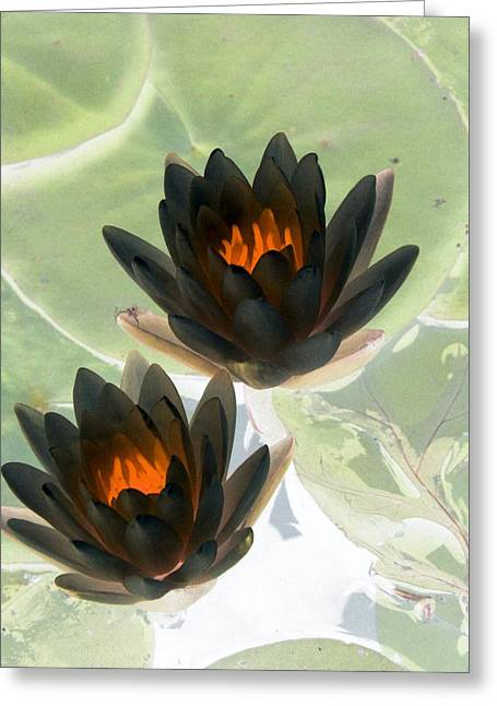 Greeting Card featuring the photograph The Water Lilies Collection - Photopower 1046 by Pamela Critchlow