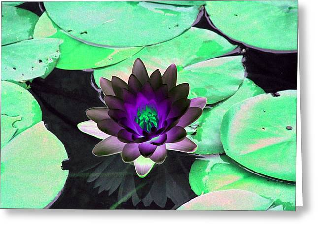 Greeting Card featuring the photograph The Water Lilies Collection - Photopower 1113 by Pamela Critchlow