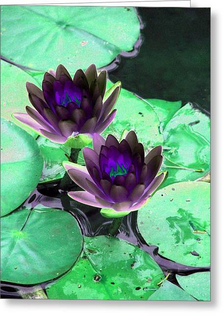 Greeting Card featuring the photograph The Water Lilies Collection - Photopower 1119 by Pamela Critchlow