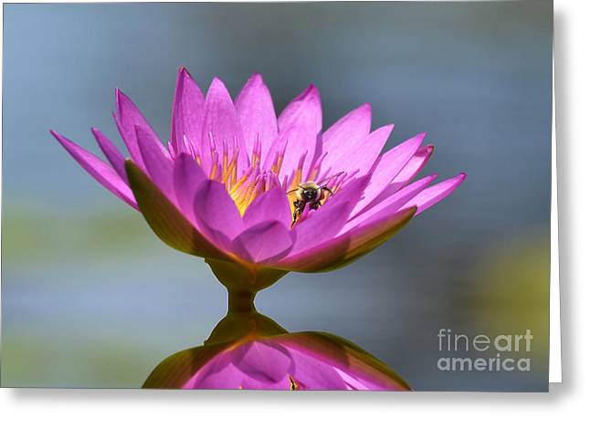 The Water Lily And The Bee Greeting Card by Kathy Baccari