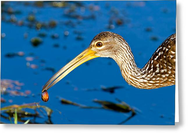The Water's Edge Seafood Cafe Greeting Card by Mark Andrew Thomas