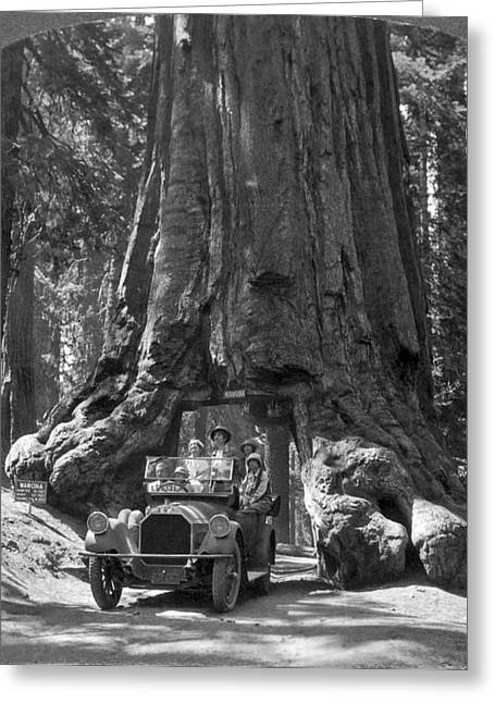 The Wawona Giant Sequoia Tree Greeting Card