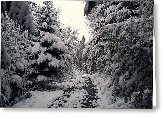 Greeting Card featuring the photograph The Way In Snow by Felicia Tica