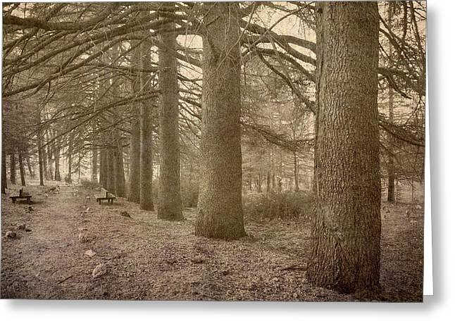 The Way Of The Big Trees Greeting Card