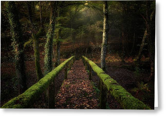 The Way To The Forest Greeting Card