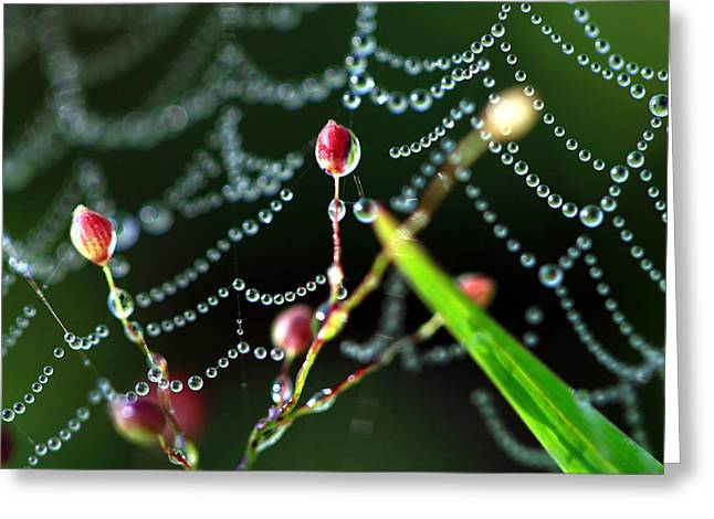 The Web And The Pods Greeting Card by Carolyn Fletcher