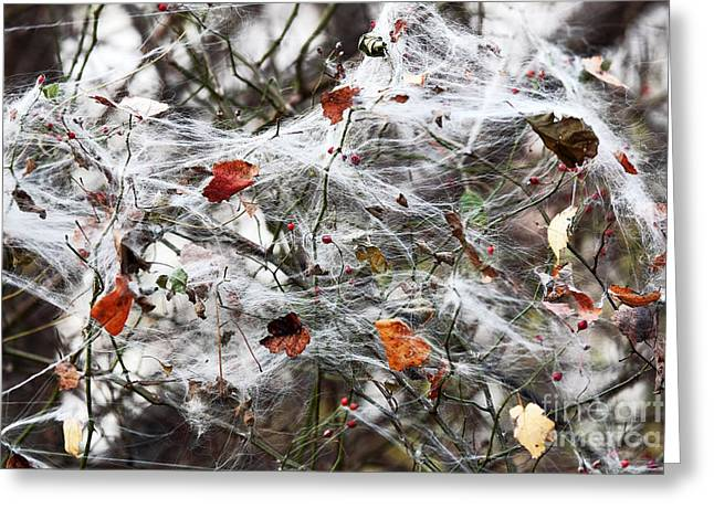 The Web Greeting Card by John Rizzuto
