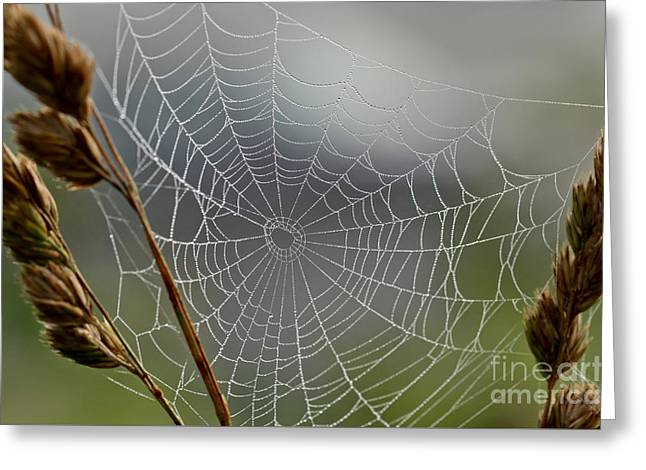 Greeting Card featuring the photograph The Web by Kerri Farley