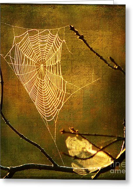 The Web We Weave Greeting Card by Darren Fisher