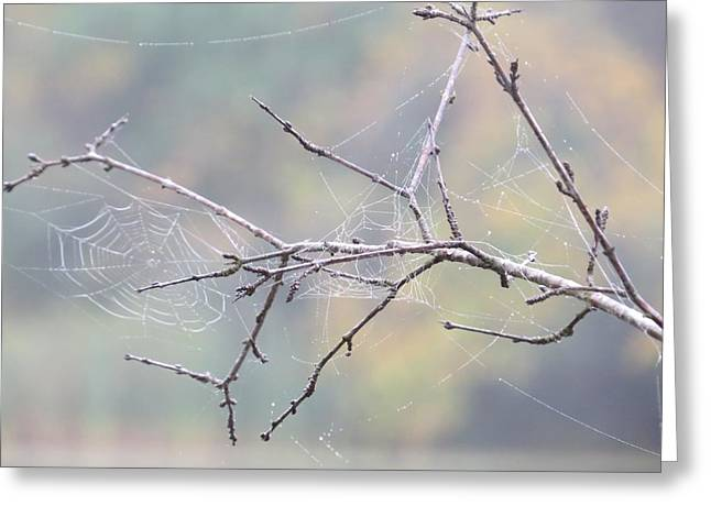 Greeting Card featuring the photograph The Web's Branch by Nikki McInnes