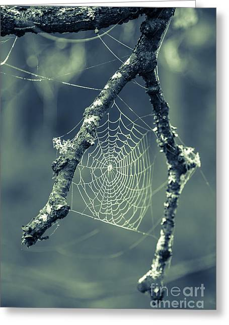 The Webs We Weave Greeting Card by Edward Fielding