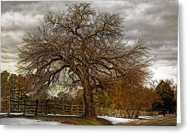 The Welcome Tree Greeting Card by Jerry Gammon