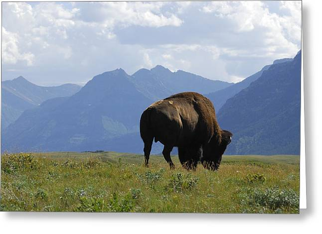 The West - Mountains And Wildlife Greeting Card by Clay and Gill Ross