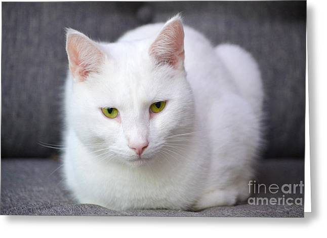 The White Beauty Greeting Card