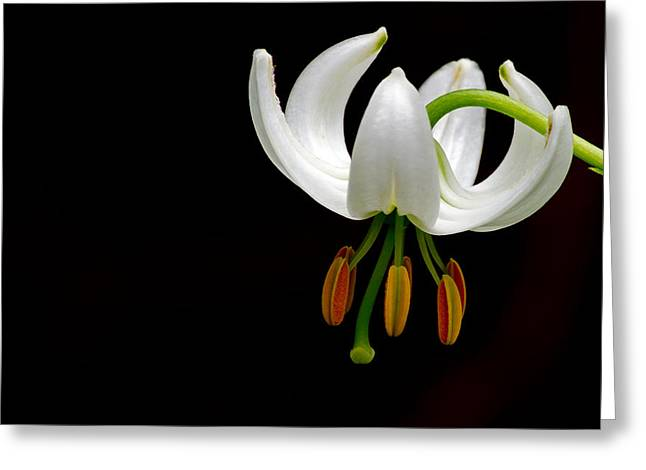 The White Form Of Lilium Martagon Named Album Greeting Card by Torbjorn Swenelius