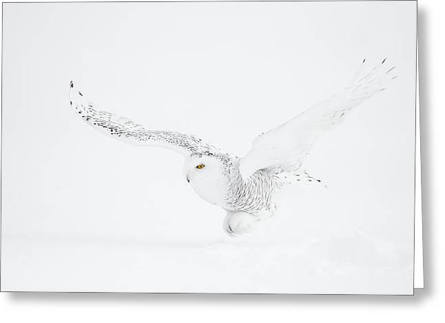 The White Ghost Is Coming Greeting Card by Marco Pozzi