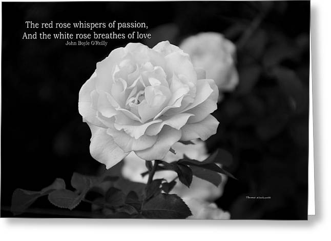 The White Rose Breathes Of Love Greeting Card by Thomas Woolworth
