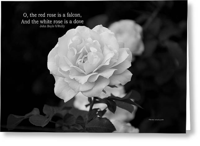 The White Rose Is A Dove Greeting Card by Thomas Woolworth