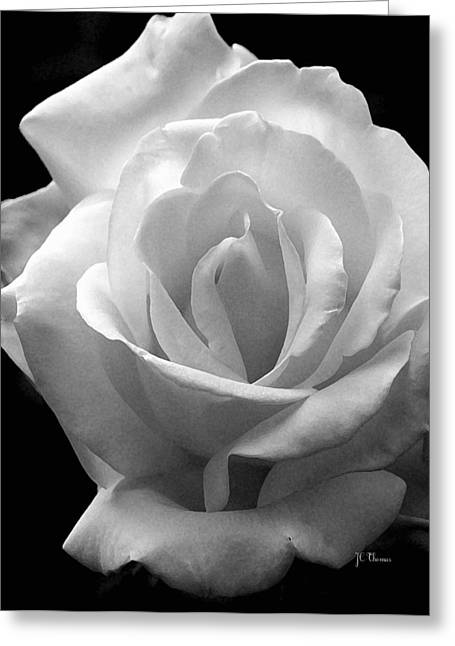 Greeting Card featuring the photograph The White Rose by James C Thomas