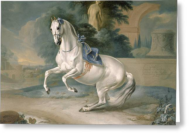 The White Stallion Leal En Levade Greeting Card by JG Hamilton