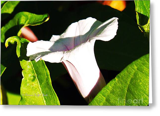 The White Trumpet Greeting Card