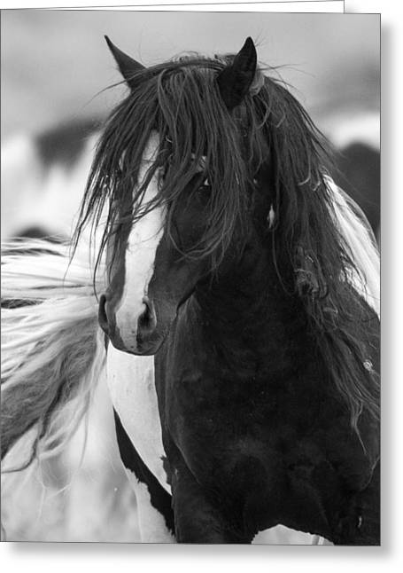 The Wild One Greeting Card by Sandy Sisti