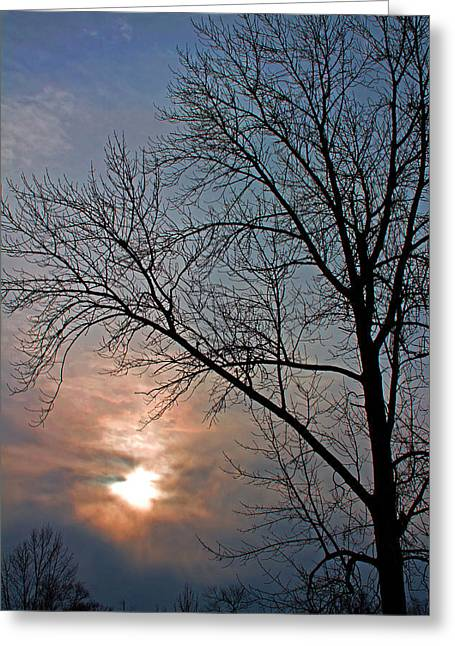 The Winter Skies Greeting Card by Rhonda Humphreys