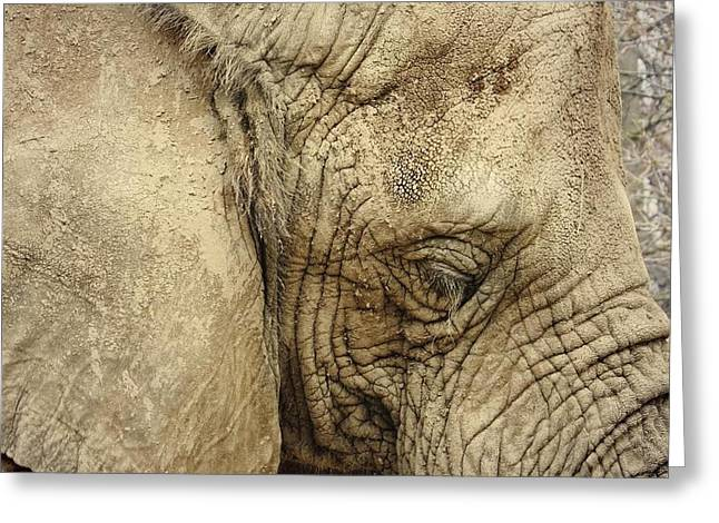Greeting Card featuring the photograph The Wise Old Elephant by Nikki McInnes