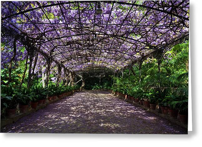 The Wisteria Arbour In Full Bloom Greeting Card by Panoramic Images