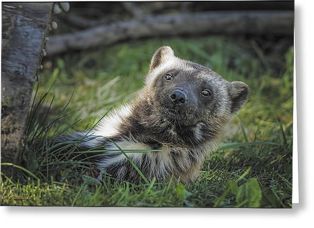 The Wolverine Skunk Bear Happy Face Greeting Card by LeeAnn McLaneGoetz McLaneGoetzStudioLLCcom