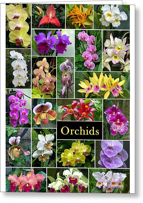 Greeting Card featuring the photograph The Wonderful World Of Orchids by Cindy McDaniel