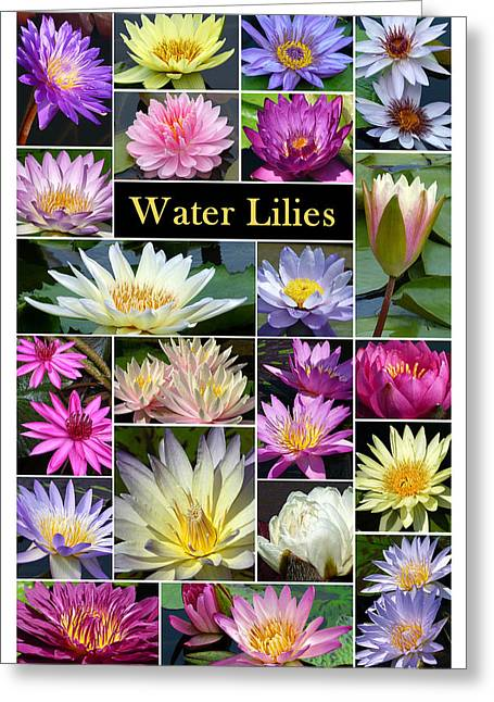 Greeting Card featuring the photograph The Wonderful World Of Water Lilies by Cindy McDaniel