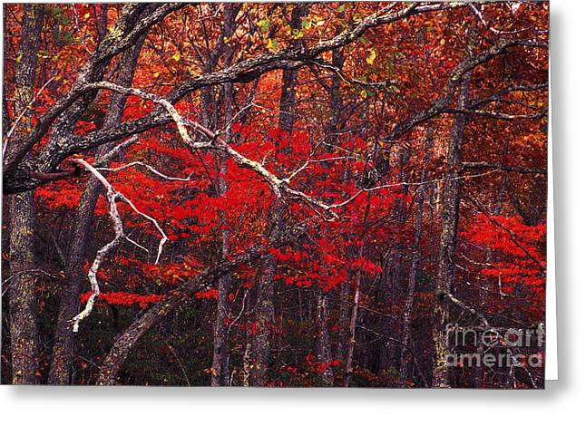 The Woods Aflame In Red Greeting Card by Paul W Faust -  Impressions of Light