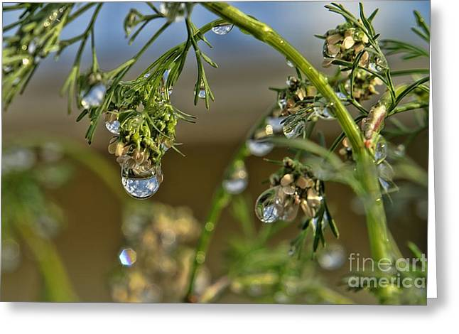 The World In A Drop Of Water Greeting Card by Peggy Hughes
