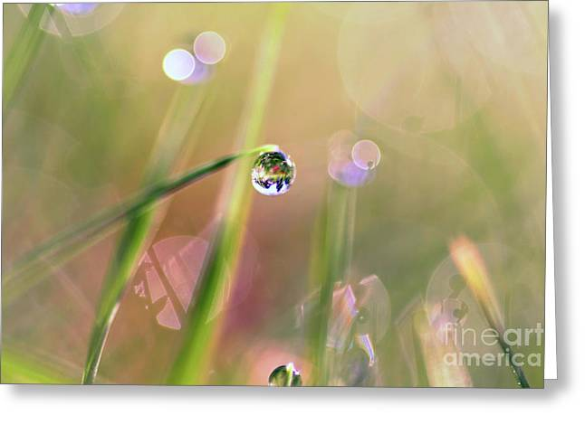 The World In A Drop Greeting Card by Sylvia Cook