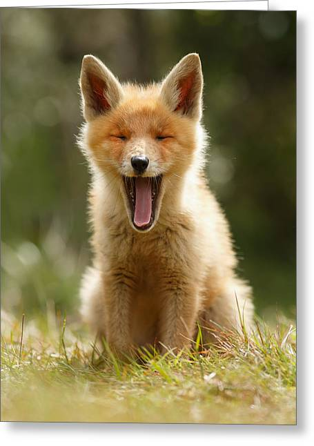 The Yawning Fox Kit Greeting Card by Roeselien Raimond