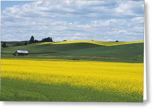 The Year Of Canola Greeting Card by Latah Trail Foundation