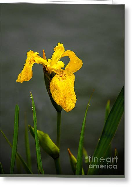 The Yellow One Greeting Card by Robert Bales