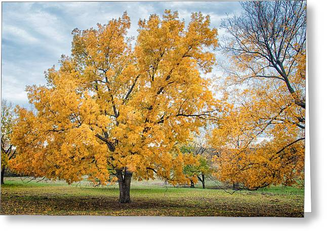 The Yellow Tree Greeting Card