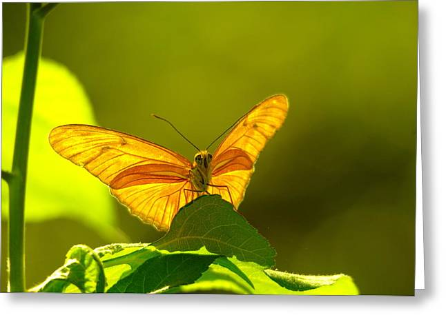 Then A Butterfly Greeting Card