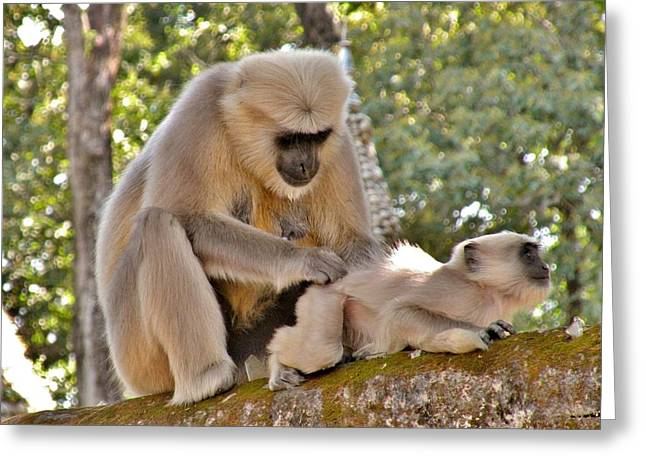 There Is Nothing Like A  Backscratch - Monkeys Rishikesh India Greeting Card