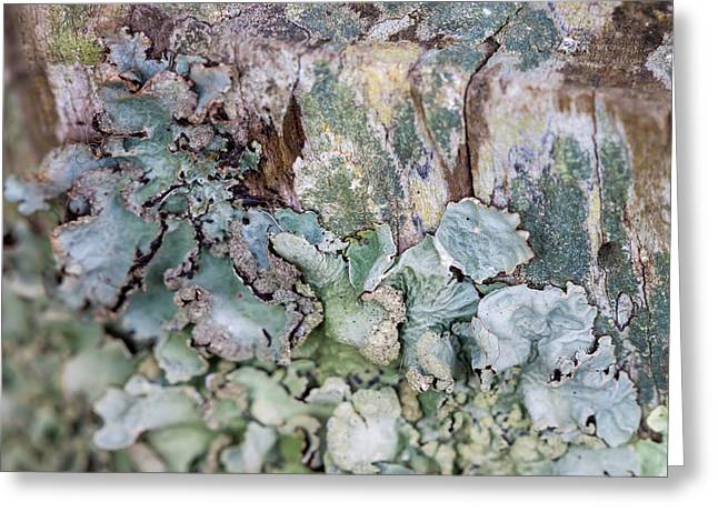 These Lichen Are Likin This Post Greeting Card by Jennifer Stinson