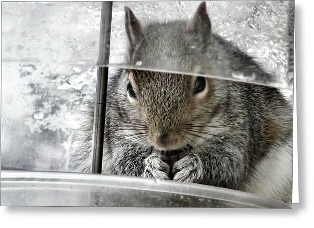 Thief In The Birdfeeder Greeting Card