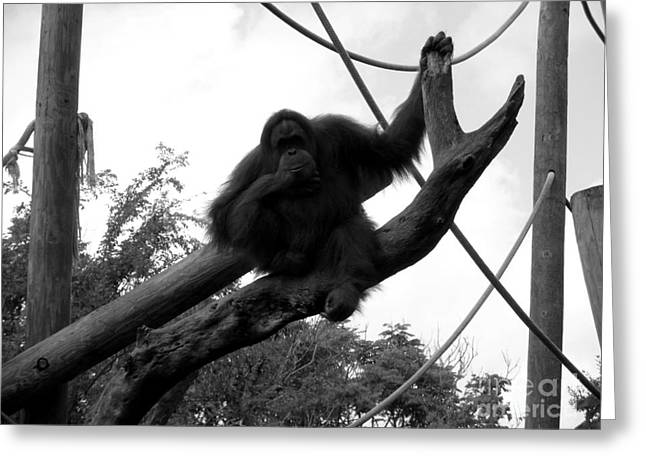 Greeting Card featuring the photograph Thinking Of You Black And White by Joseph Baril