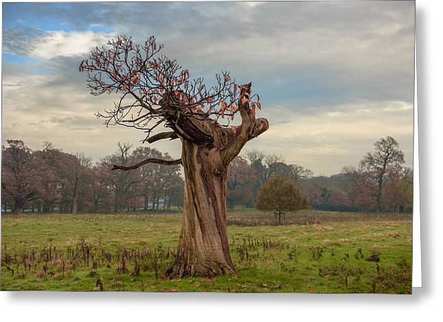 Thinning On Top In The Autumn Years Greeting Card by Chris Fletcher