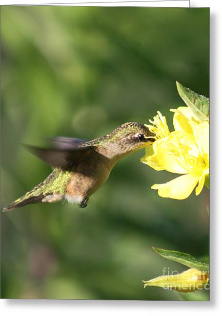 Greeting Card featuring the photograph Thirsty Little Hummingbird by Anita Oakley
