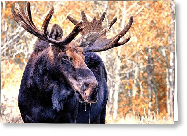 Thirsty Moose Greeting Card